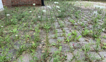 Does brick paver maintenance prevent weeds, moss and algae in Michigan?